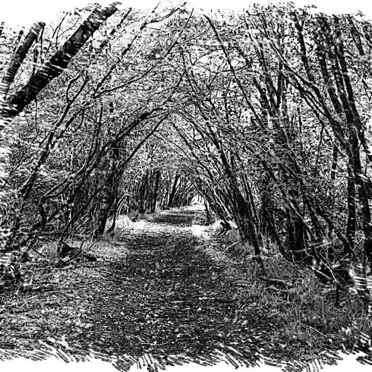 T01 E03 Las armas y el bosque